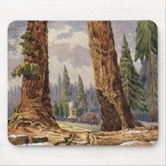 Les deux sentinelles, au verger de grands arbres tapis de souris