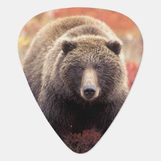 Les Etats-Unis, Alaska, Denali NP, ours gris Médiators