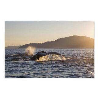 Les Etats-Unis, Alaska, Megaptera de baleine de bo Impression Photo