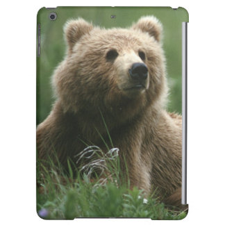Les Etats-Unis, Alaska, ours bruns de sous-adulte