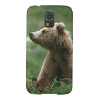 Les Etats-Unis, Alaska, ours bruns de sous-adulte Coque Pour Samsung Galaxy S5