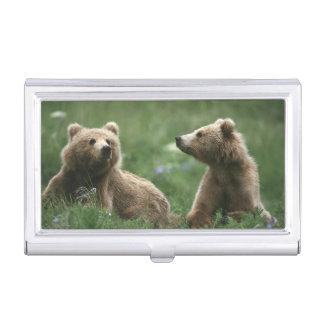Les Etats-Unis, Alaska, ours bruns de sous-adulte Porte-cartes De Visite