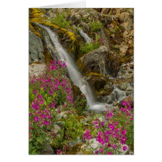 Les Etats-Unis, Alaska, parc national de baie de Carte De Vœux
