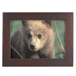 Les Etats-Unis, Alaska, parc national de Denali, Boîte À Souvenirs