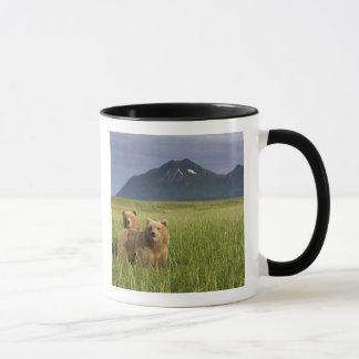 Les Etats-Unis, Alaska, parc national de Katmai, Mugs