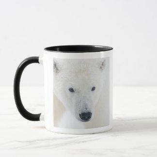 Les Etats-Unis, Alaska, plaine 1002 côtière des 3 Mug