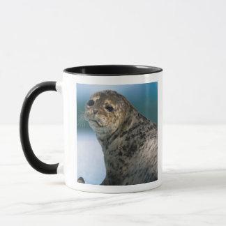 Les Etats-Unis, Alaska, réserve forestière de Mug