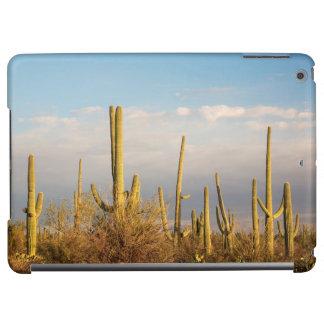 Les Etats-Unis, Arizona, parc national de Saguaro,