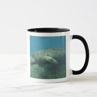 Les Etats-Unis, FL, lamantin Mug