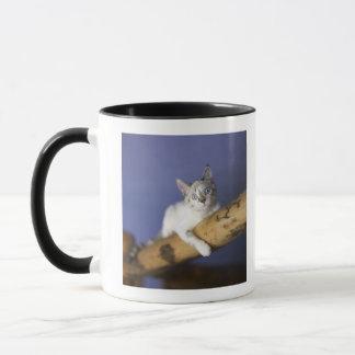 Les Etats-Unis, Iowa, portrait de jeune chaton Mug