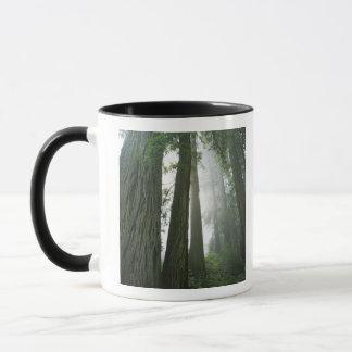 Les Etats-Unis, la Californie, parc national de Mug