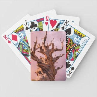 Les Etats-Unis, la Californie, réserve forestière Jeu De Poker