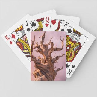 Les Etats-Unis, la Californie, réserve forestière Jeux De Cartes