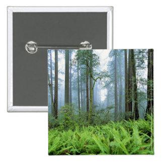 Les Etats-Unis, la Californie, séquoia NP. Arbres  Badges