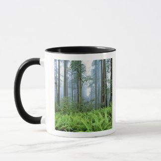 Les Etats-Unis, la Californie, séquoia NP. Arbres Mug