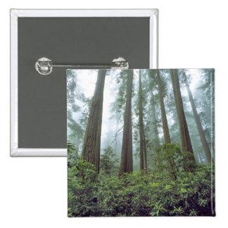 Les Etats-Unis, la Californie, séquoia NP. Le brou Badge