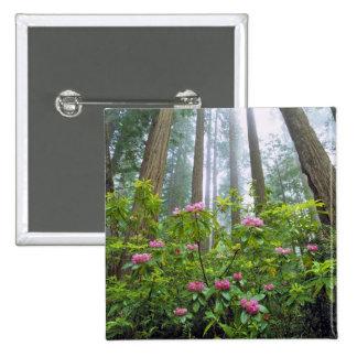 Les Etats-Unis, la Californie, séquoia NP. Rhodode Badge