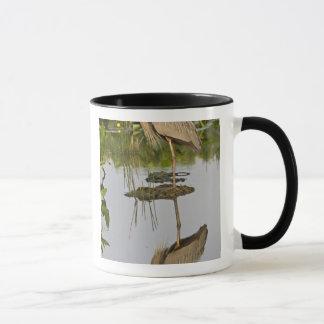 Les Etats-Unis, la Floride, Delray Beach. Héron de Mugs
