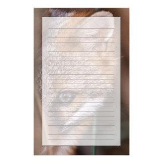 Les Etats-Unis, la Floride, Fox de marais Papier À Lettre Personnalisé