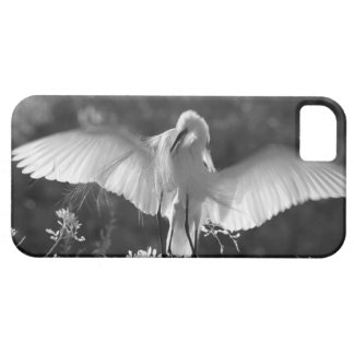 Les Etats-Unis, la Floride, grand infrarouge 2 de Coque iPhone 5 Case-Mate