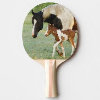 Les Etats-Unis, la Floride, pouliche nouveau-née Raquette De Ping Pong