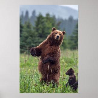 Les Etats-Unis, l'Alaska du sud-est, ours de Brown Posters