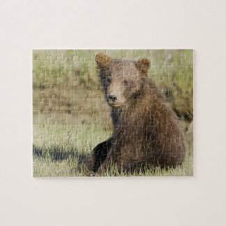 LES Etats-Unis. L'Alaska. Petit animal d'ours côti Puzzle