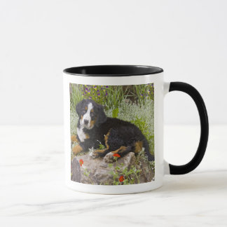 Les Etats-Unis, le Colorado, Breckenridge. Bernese Mug