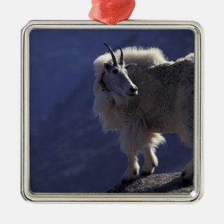 Les Etats-Unis, le Colorado, chèvre de montagne Ornement Carré Argenté