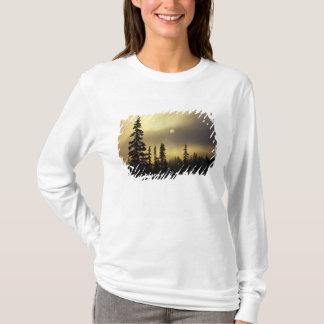 Les Etats-Unis, le Colorado, forêt nationale de T-shirt