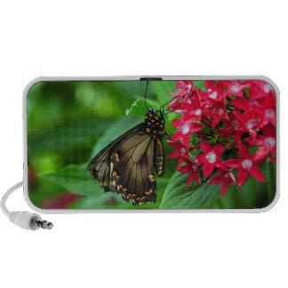 Les Etats-Unis, le Kansas, papillon sur les fleurs Haut-parleurs Portables