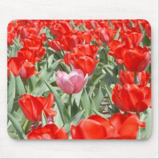 Les Etats-Unis, le Kansas, tulipes rouges avec une Tapis De Souris
