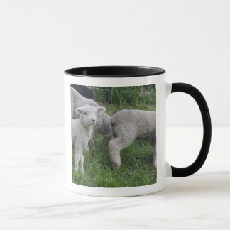 Les Etats-Unis, le Massachusetts, Shelburne. Tasse