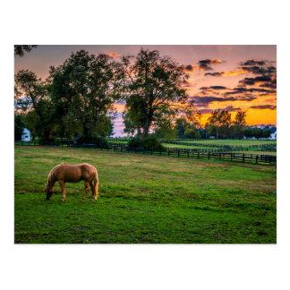 Les Etats-Unis, Lexington, Kentucky. Cheval Carte Postale