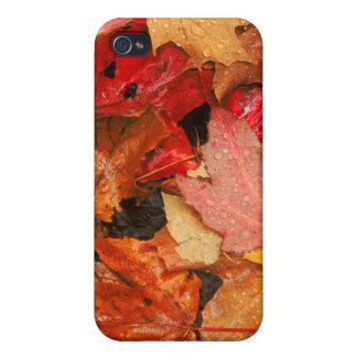 Les Etats-Unis, Maine. Feuille d'érable d'automne Coque iPhone 4