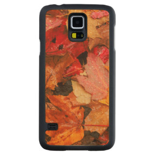 Les Etats-Unis, Maine. Feuille d'érable d'automne Coque Slim Galaxy S5 En Érable