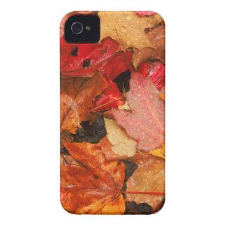 Les Etats-Unis, Maine. Feuille d'érable d'automne Coques Case-Mate iPhone 4
