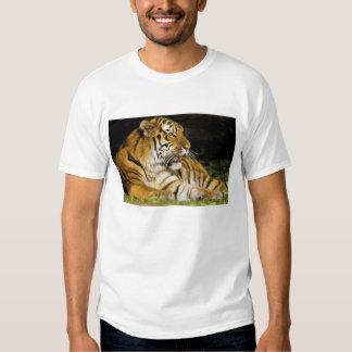 Les Etats-Unis, Michigan, Detroit. Zoo de Detroit, T-shirt