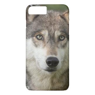 Les Etats-Unis, Minnesota, grès, faune 5 du Coque iPhone 7 Plus