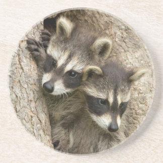 Les Etats-Unis, Minnesota, grès, faune 7 du Dessous De Verres