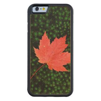 Les Etats-Unis, Missouri, réserve forestière de Coque iPhone 6 Bumper En Érable