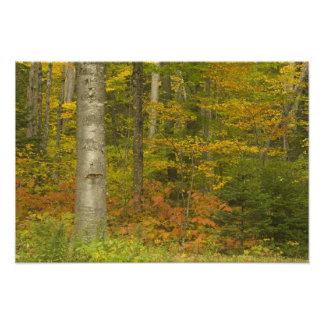 Les Etats-Unis, New Hampshire, Livermore, montagne Photographie D'art