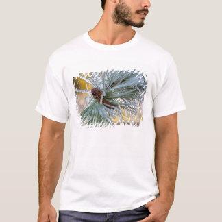 Les Etats-Unis, Orégon, courbure. Les aiguilles de T-shirt