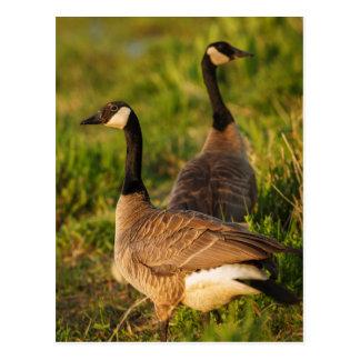 Les Etats-Unis, Orégon, faune nationale 3 de Cartes Postales