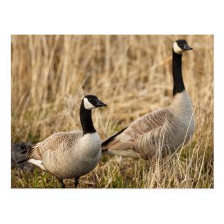 Les Etats-Unis, Orégon, faune nationale 5 de Cartes Postales