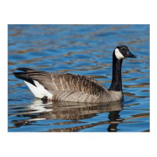 Les Etats-Unis, Orégon, faune nationale 7 de Carte Postale
