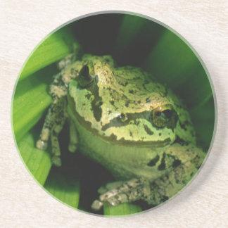 Les Etats-Unis, Orégon, Treefrog dans le Hellebore Dessous De Verres