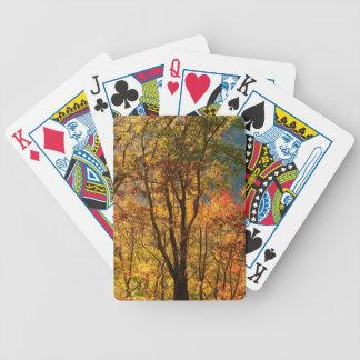 Les Etats-Unis, Tennessee. Feuillage d'automne Cartes À Jouer