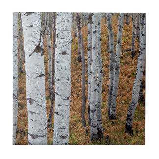 Les Etats-Unis, Utah, réserve forestière 2 Carreau