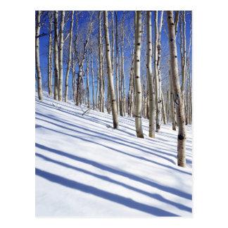 Les Etats-Unis, Utah, réserve forestière de Dixie, Carte Postale